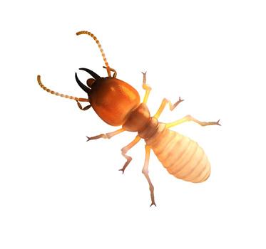 Termites_e48ac8b1a0352915f8b878cc9f4f1a2e