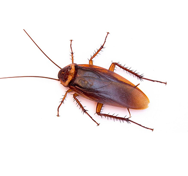 pests_0001_roach-curtain_947307110c0cbb43eac0dd1be1e71ec6